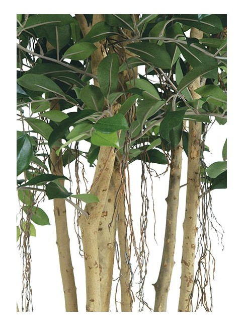 FICUS RETUSA artificial 170 cm TRONCO NATURAL en www.villafiore.es